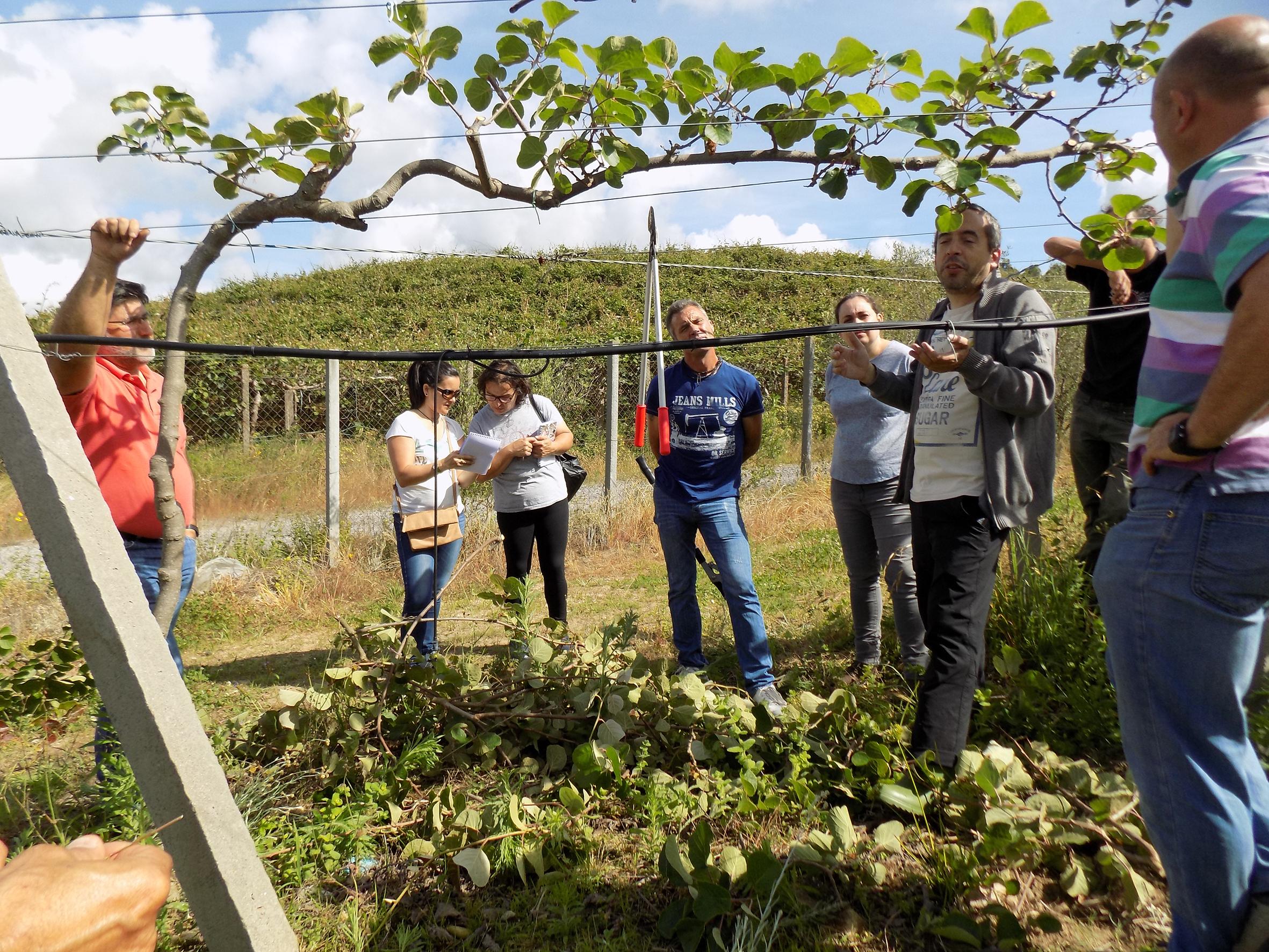 Jardineros de Agaexar mejoran sus conocimientos en la técnica de poda de kiwi