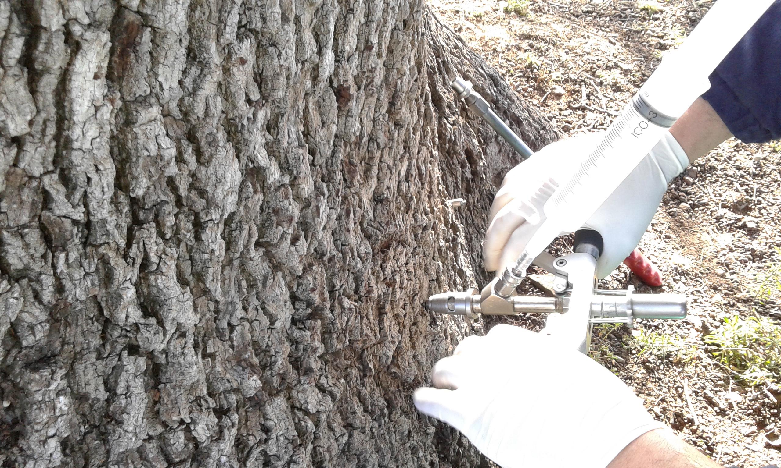 Endoterapia – Alternativa sostenible al control de plagas en arbolado mediante inyección al tronco